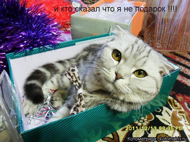 Котоматрица: и кто сказал что я не подарок !!!!