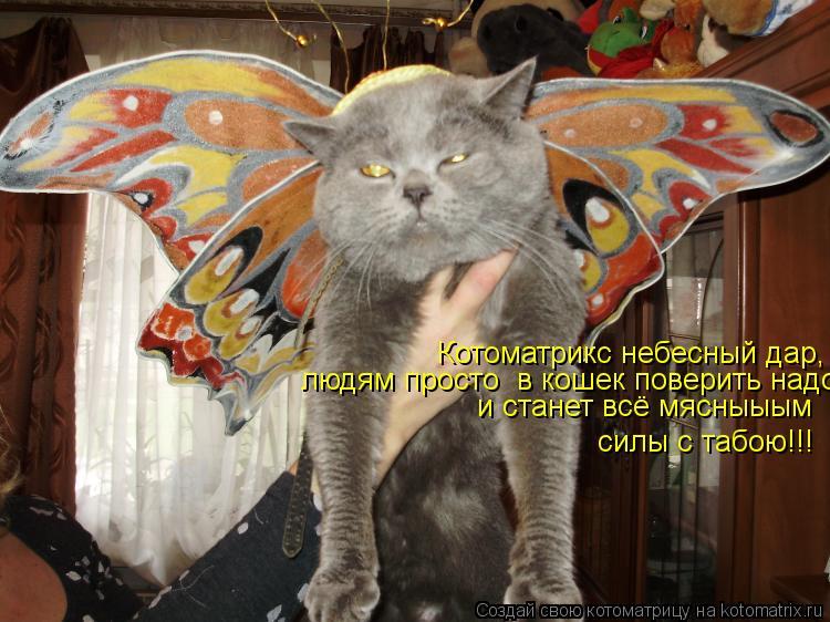 Котоматрица: Котоматрикс небесный дар, людям просто  в кошек поверить надо и станет всё мясныыым силы с табою!!!