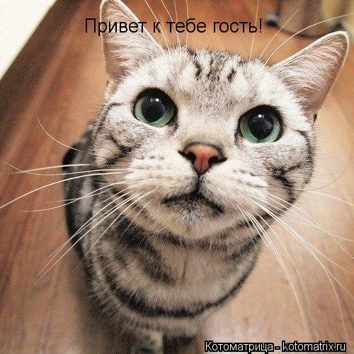 Котоматрица: Привет к тебе гость!