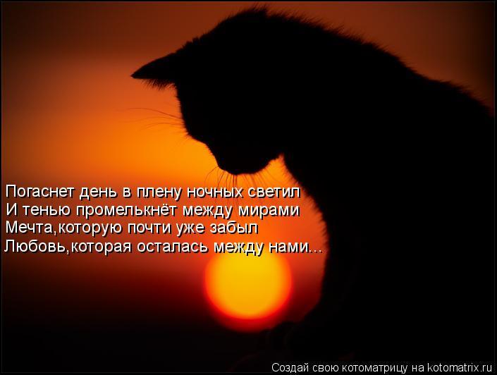Котоматрица: Погаснет день в плену ночных светил И тенью промелькнёт между мирами Мечта,которую почти уже забыл Любовь,которая осталась между нами...