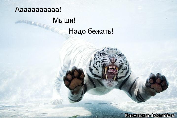 Котоматрица: Ааааааааааа! Мыши! Надо бежать!