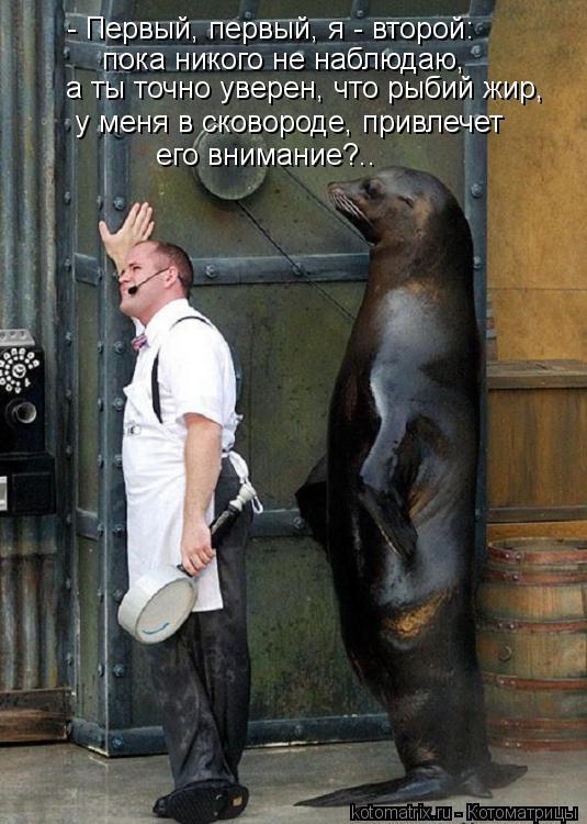 Котоматрица: - Первый, первый, я - второй:  пока никого не наблюдаю, а ты точно уверен, что рыбий жир,  у меня в сковороде, привлечет  его внимание?..