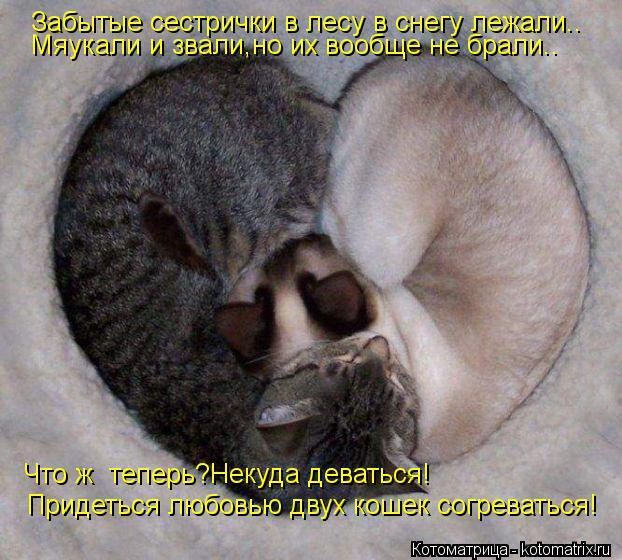 Котоматрица: Забытые сестрички в лесу в снегу лежали.. Мяукали и звали,но их вообще не брали.. Что ж  теперь?Некуда деваться! Придеться любовью двух кошек