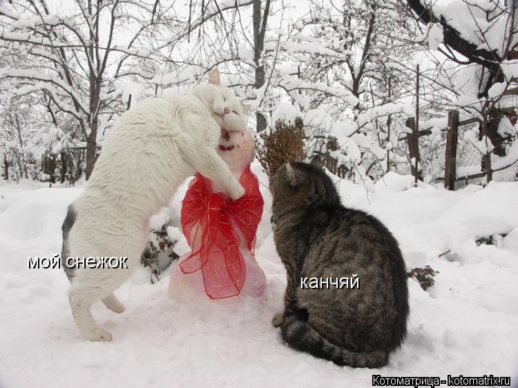 Котоматрица: канчяй мой снежок