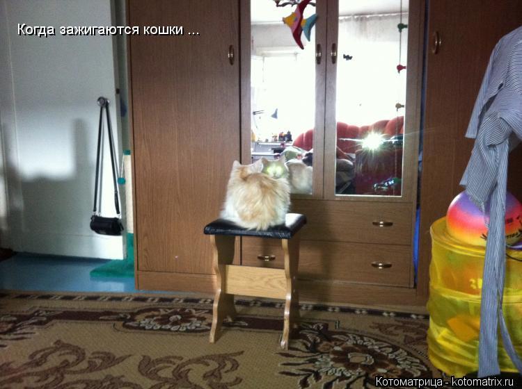 Котоматрица: Когда зажигаются кошки ...