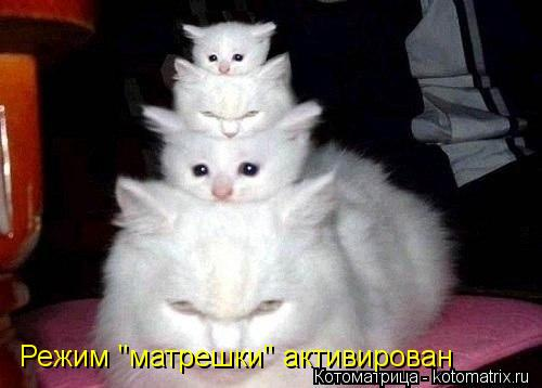 """Котоматрица: Режим """"матрешки"""" активирован"""