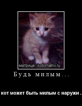 Котоматрица: Будь милым... кот может быть милым с наружи .