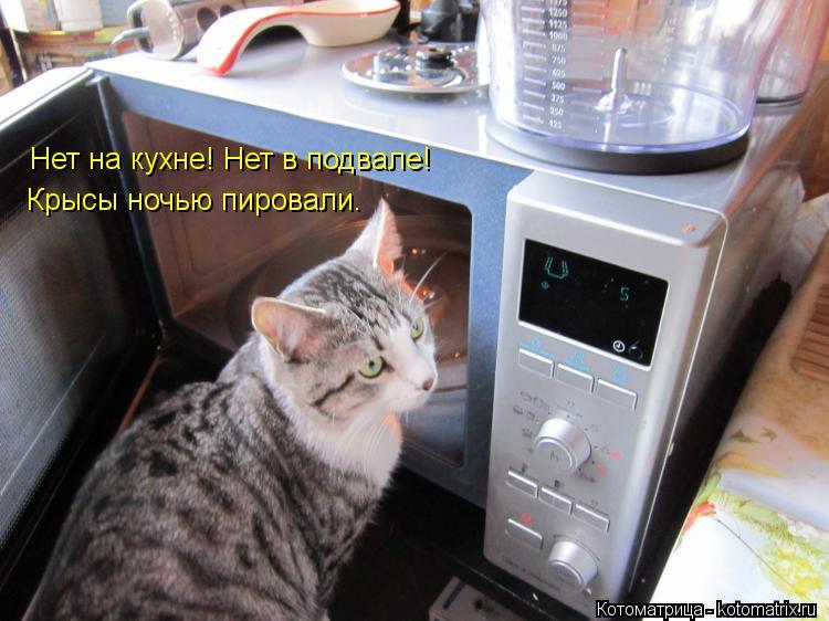 Котоматрица: Нет на кухне! Нет в подвале! Крысы ночью пировали.