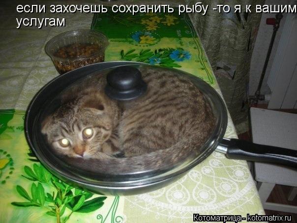 Котоматрица: если захочешь сохранить рыбу -то я к вашим услугам услугам