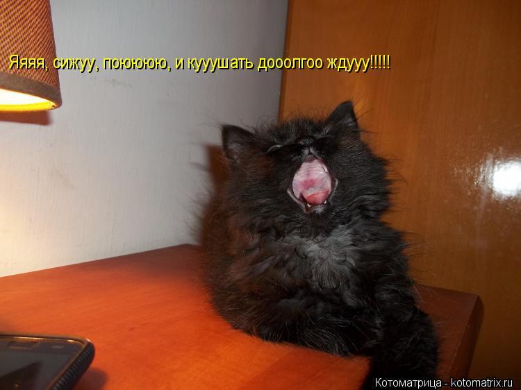 Котоматрица: Яяяя, сижуу, поюююю, и кууушать дооолгоо ждууу!!!!!