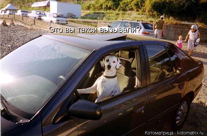 Котоматрица: Это вы такси вызывали?