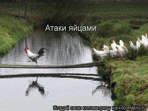 Котоматрица: Атаки яйцами