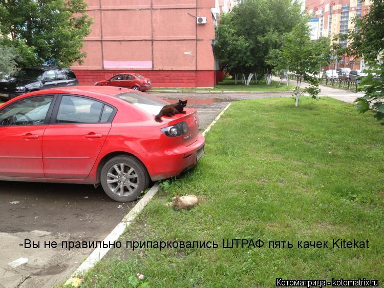 Котоматрица: -Вы не правильно припарковались ШТРАФ пять качек Kitekat