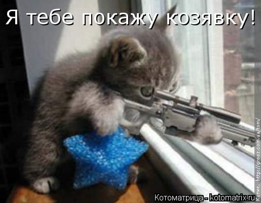 Котоматрица: Я тебе покажу козявку!