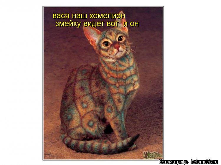 Котоматрица: вася наш хомелион вася наш хомелион  змейку видет вот  и он  змейку видет вот  и он