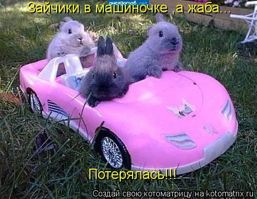 Котоматрица: Зайчики в машиночке ,а жаба... Потерялась!!! Потерялась!!!