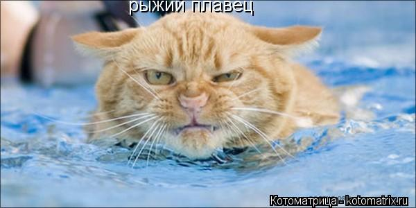 Котоматрица: рыжий плавец