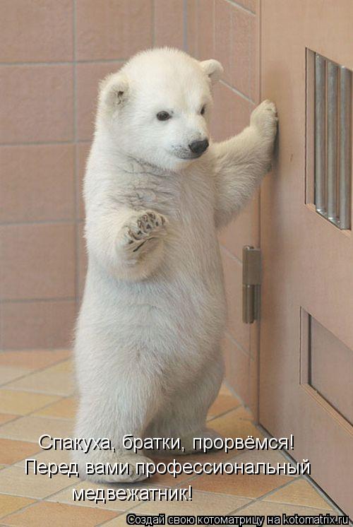 Котоматрица: Спакуха, братки, прорвёмся! Перед вами профессиональный медвежатник!