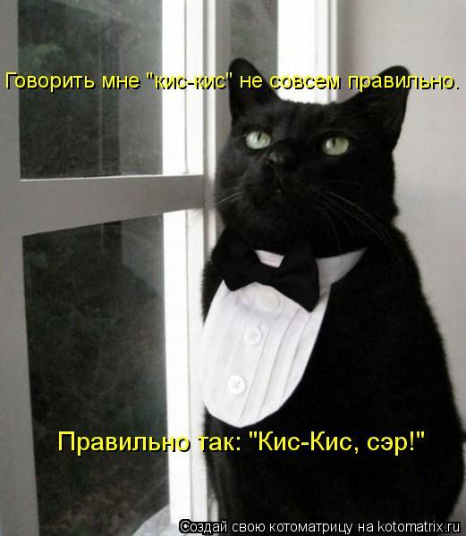 """Котоматрица: Правильно так: """"Кис-Кис, сэр!"""" Говорить мне """"кис-кис"""" не совсем правильно."""