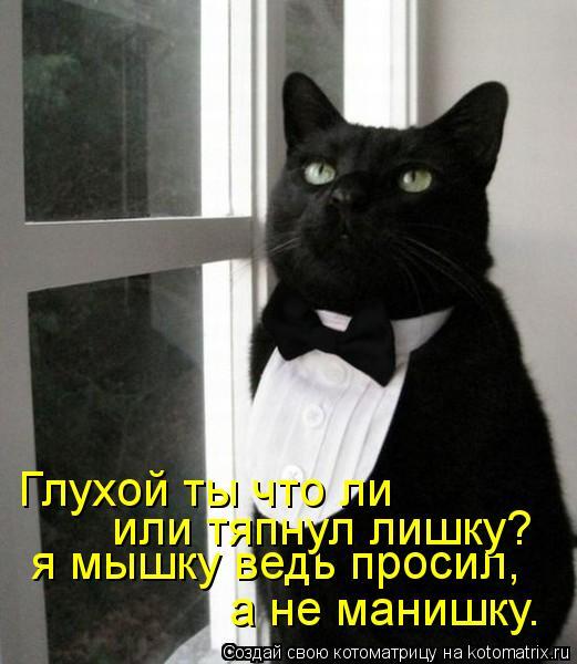 Котоматрица: я мышку ведь просил, а не манишку. Глухой ты что ли или тяпнул лишку?