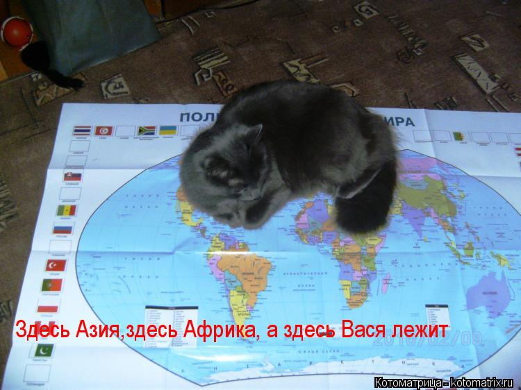 Котоматрица: Здесь Азия,здесь Африка, а здесь Вася лежит