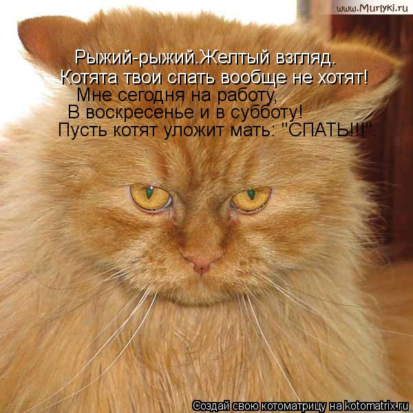 """Котоматрица: Рыжий-рыжий.Желтый взгляд. Котята твои спать вообще не хотят! Мне сегодня на работу, В воскресенье и в субботу! Пусть котят уложит мать: """"СПАТ"""