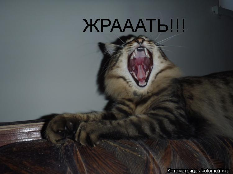 Котоматрица: ЖРАААТЬ!!!