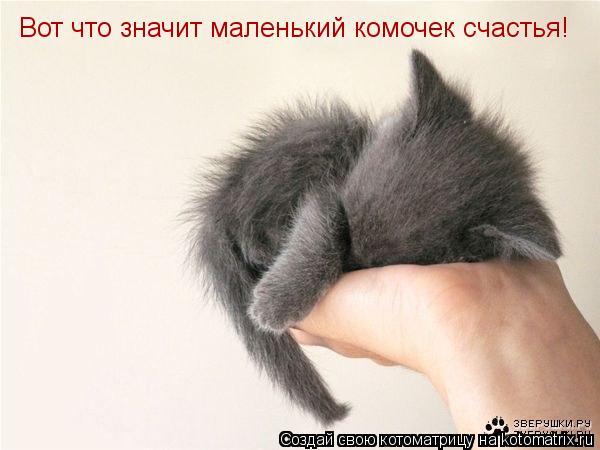 Котоматрица: Вот что значит маленький комочек счастья!