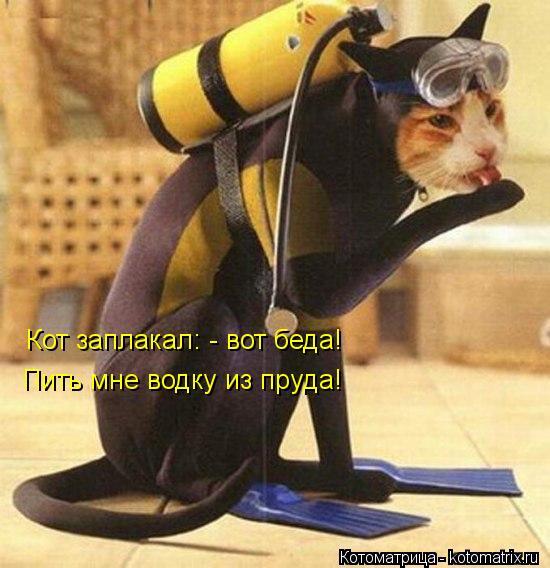 Котоматрица: Кот заплакал: - вот беда! Пить мне водку из пруда!