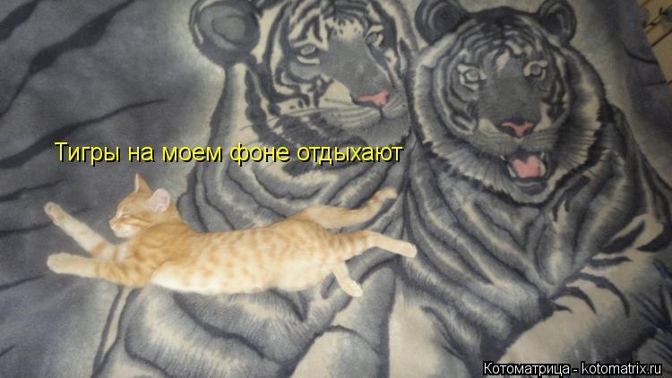 Котоматрица: Тигры на моем фоне отдыхают
