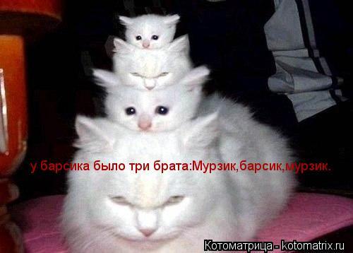 Котоматрица: у барсика было три брата:Мурзик,барсик,мурзик.
