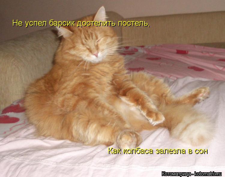 Котоматрица: Не успел барсик достелить постель, Как колбаса залезла в сон