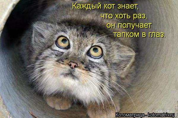 Котоматрица: Каждый кот знает, что хоть раз, он получает тапком в глаз.