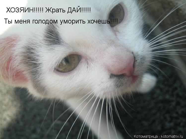 Котоматрица: ХОЗЯИН!!!!! Жрать ДАЙ!!!!! Ты меня голодом уморить хочешь!!!!