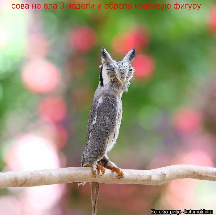 Котоматрица: сова не ела 3 недели и обрела красивую фигуру