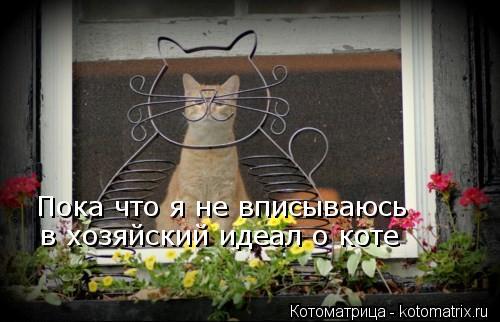 Котоматрица: Пока что я не вписываюсь в хозяйский идеал о коте