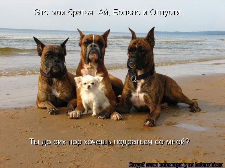 Котоматрица: Это мои братья: Ай, Больно и Отпусти... Ты до сих пор хочешь подраться со мной?