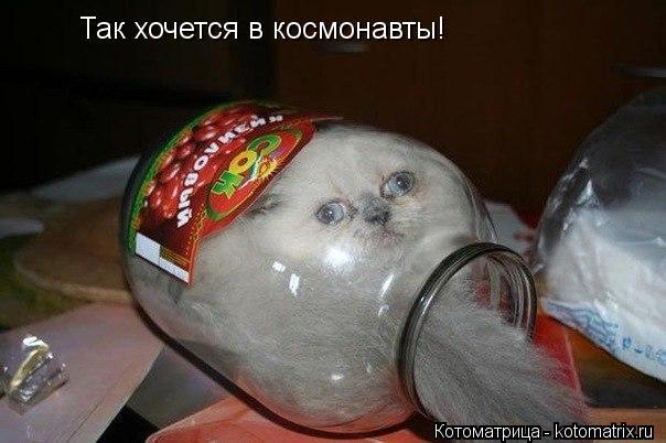 Котоматрица: Так хочется в космонавты!