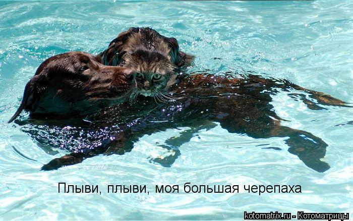 Котоматрица: Плыви, плыви, моя большая черепаха