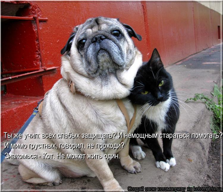 Котоматрица: Ты же учил: всех слабых защищать? И немощным стараться помогать? И мимо грустных, говорил, не проходи?  Знакомься - Кот. Не может жить один.