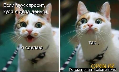 kotomatritsa_-U.jpg