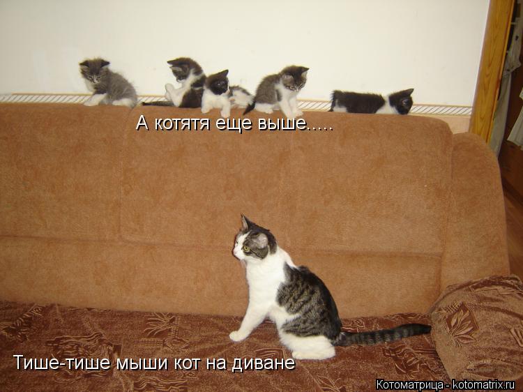 Котоматрица: А котятя еще выше..... Тише-тише мыши кот на диване
