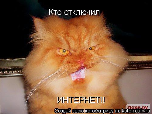 Котоматрица: Кто отключил ИНТЕРНЕТ!!