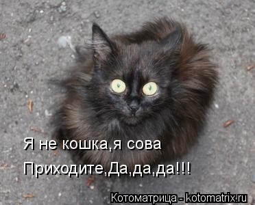 Котоматрица: Я не кошка,я сова Я не кошка,я сова Приходите,Да,да,да!!!
