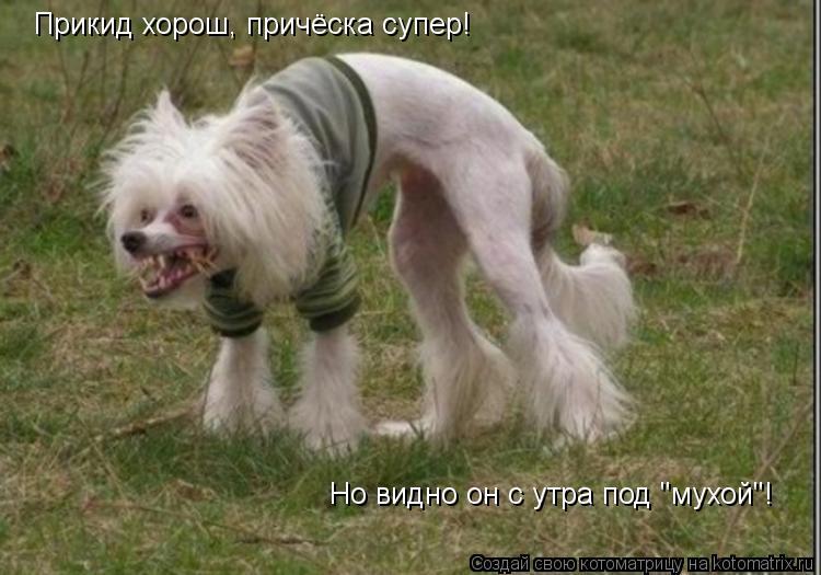 "Котоматрица: Но видно он с утра под ""мухой""! Прикид хорош, причёска супер!"