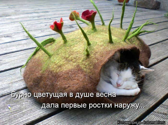 Котоматрица: Бурно цветущая в душе весна дала первые ростки наружу...