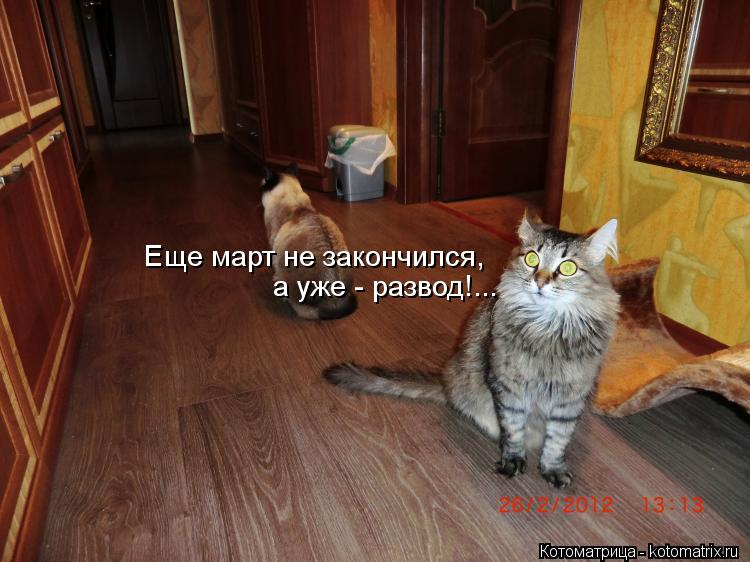 Котоматрица: Еще март не закончился, а уже - развод!...