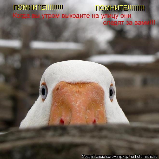 Котоматрица: ПОМНИТЕ!!!!!!!!! ПОМНИТЕ!!!!!!!!! Когда вы утром выходите на улицу они  следят за вами!!!