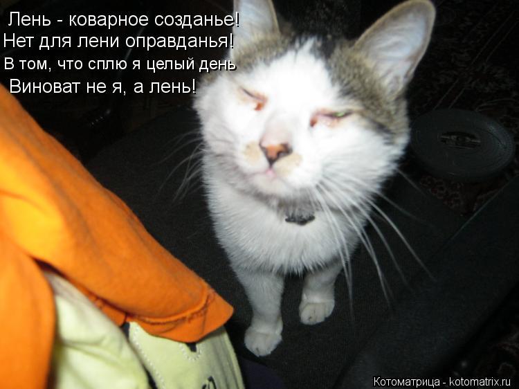 Котоматрица: Лень - коварное созданье! Нет для лени оправданья! В том, что сплю я целый день Виноват не я, а лень!