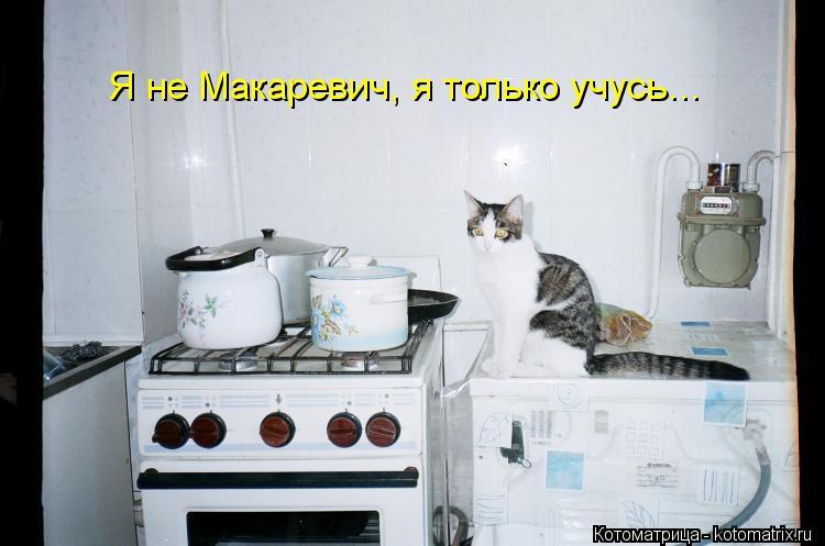 Котоматрица: Я не Макаревич, я только учусь...